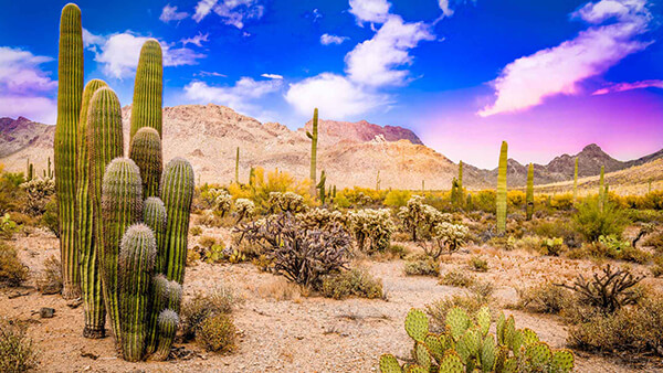 Popular destinations from New York to United States (PHX)